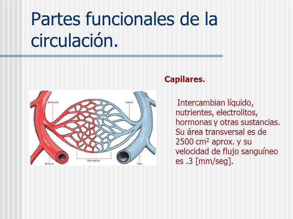 Partes funcionales de la circulación.