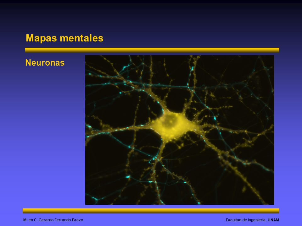 Mapas mentales Neuronas