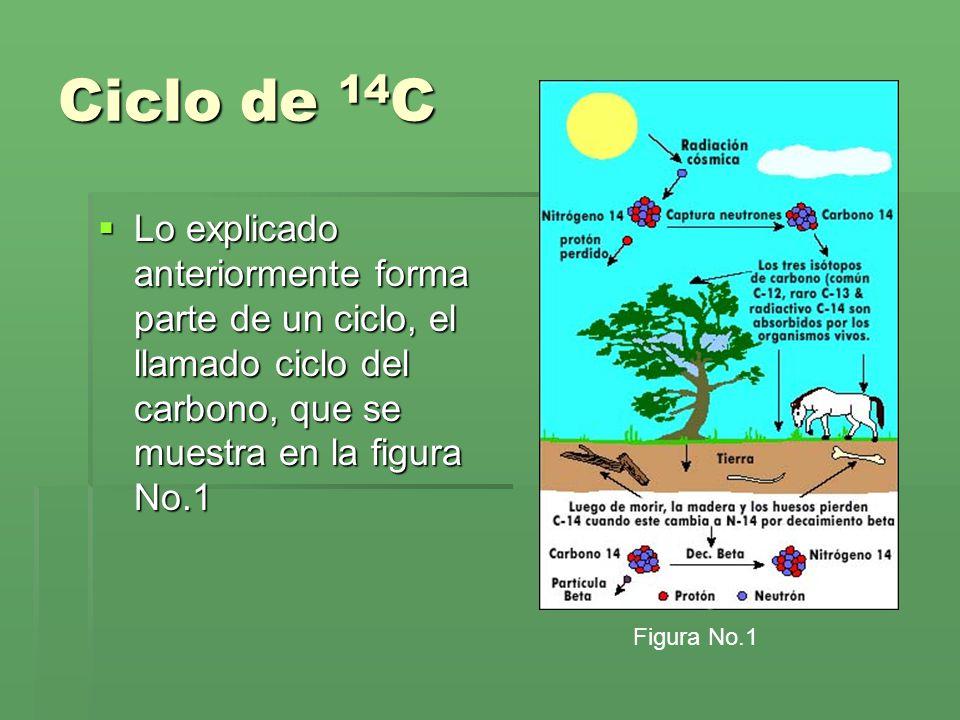 Ciclo de 14C Lo explicado anteriormente forma parte de un ciclo, el llamado ciclo del carbono, que se muestra en la figura No.1.