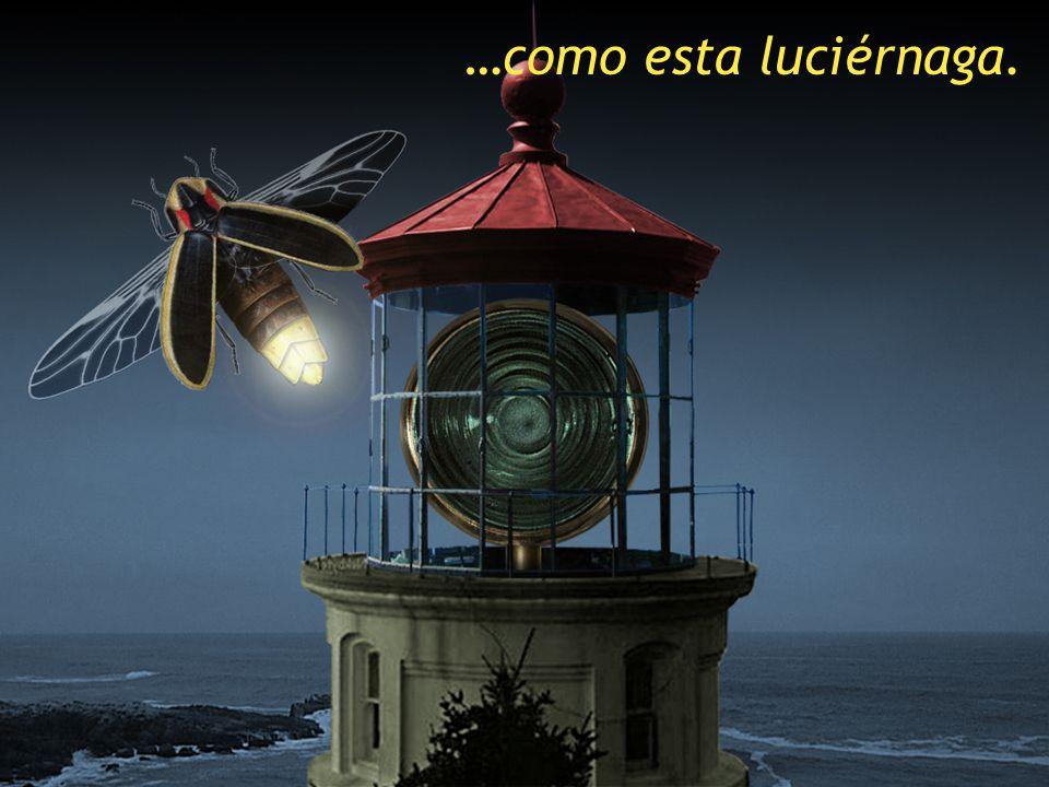 …como esta luciérnaga. SCRIPT: Like this firefly.