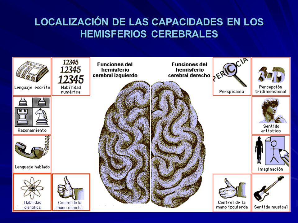 LOCALIZACIÓN DE LAS CAPACIDADES EN LOS HEMISFERIOS CEREBRALES