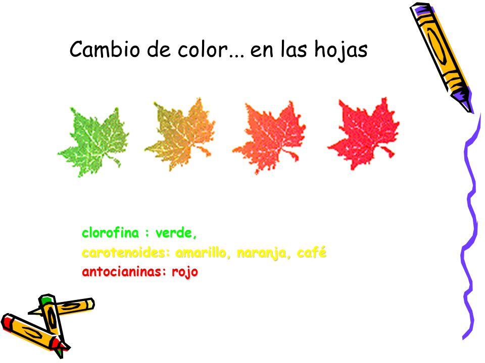 Cambio de color... en las hojas
