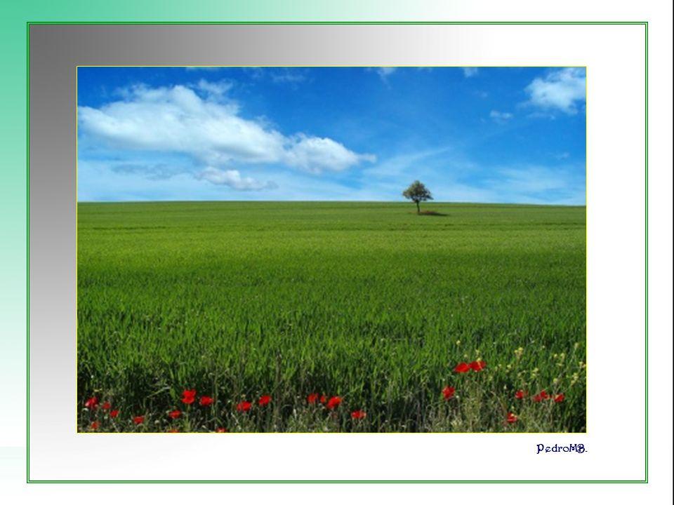 Cuando la muda melodía de las verdes hojas alienta mi esperanza.