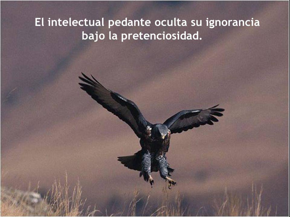 El intelectual pedante oculta su ignorancia