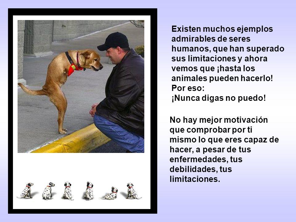 Existen muchos ejemplos admirables de seres humanos, que han superado sus limitaciones y ahora vemos que ¡hasta los animales pueden hacerlo! Por eso: