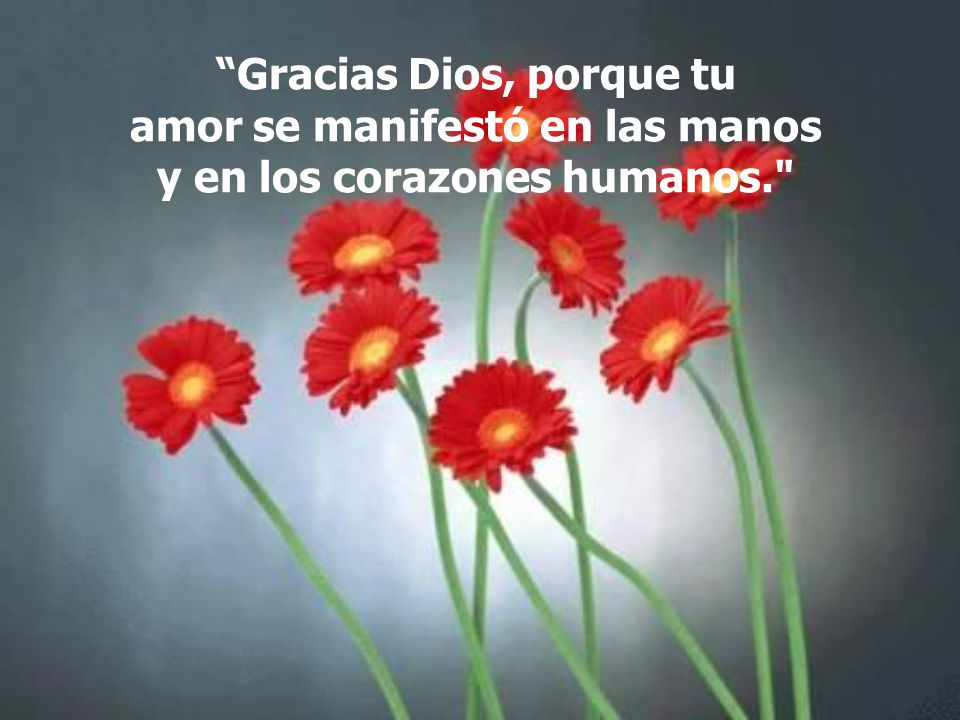 Gracias Dios, porque tu amor se manifestó en las manos y en los corazones humanos.