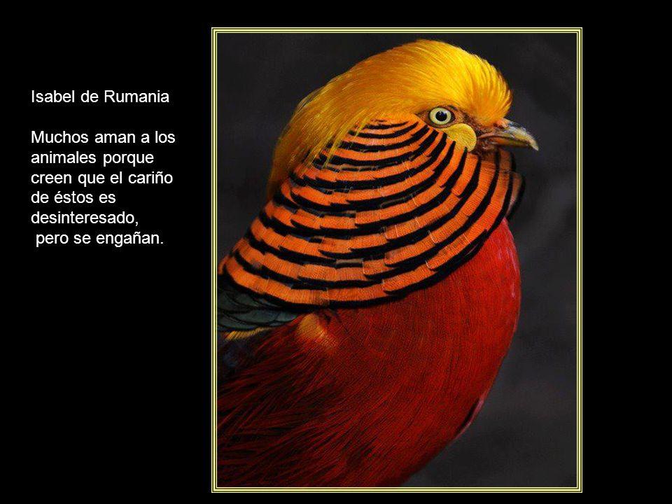 Isabel de Rumania Muchos aman a los animales porque creen que el cariño de éstos es desinteresado, pero se engañan.