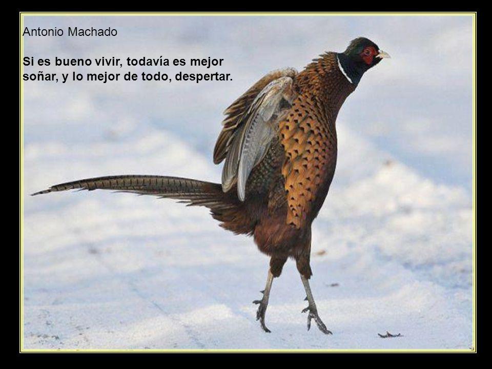 Antonio Machado Si es bueno vivir, todavía es mejor soñar, y lo mejor de todo, despertar.