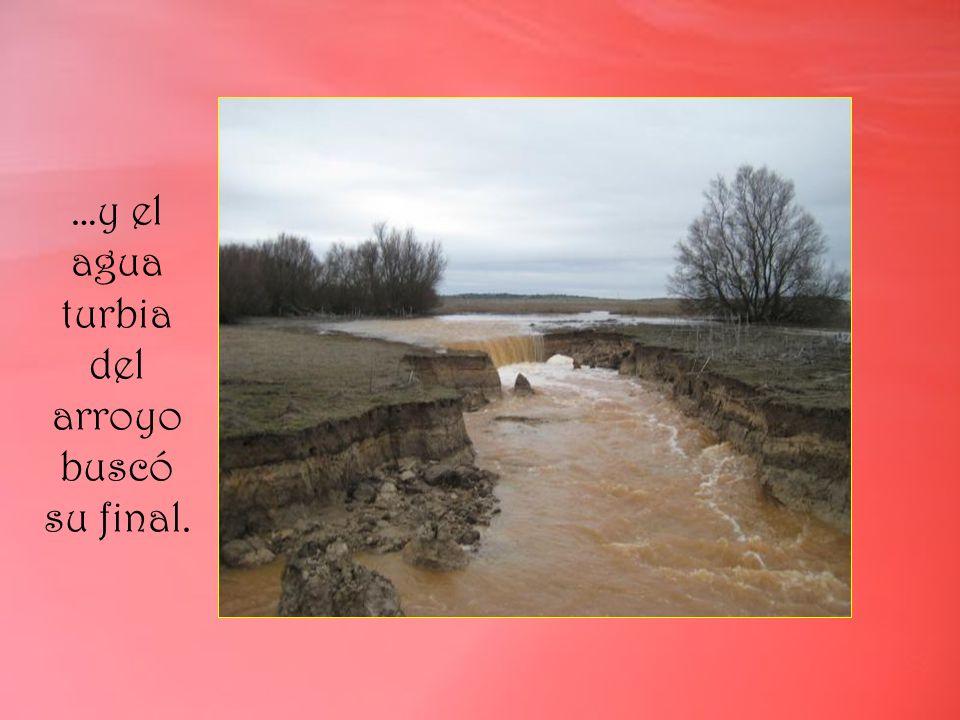 …y el agua turbia del arroyo buscó su final.