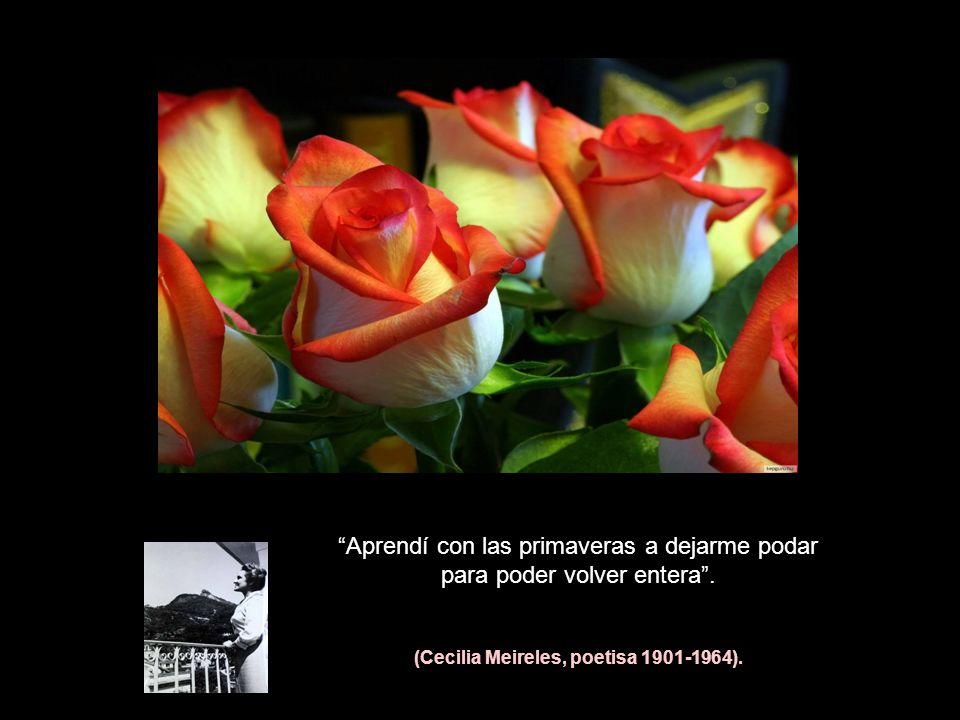 (Cecilia Meireles, poetisa 1901-1964).