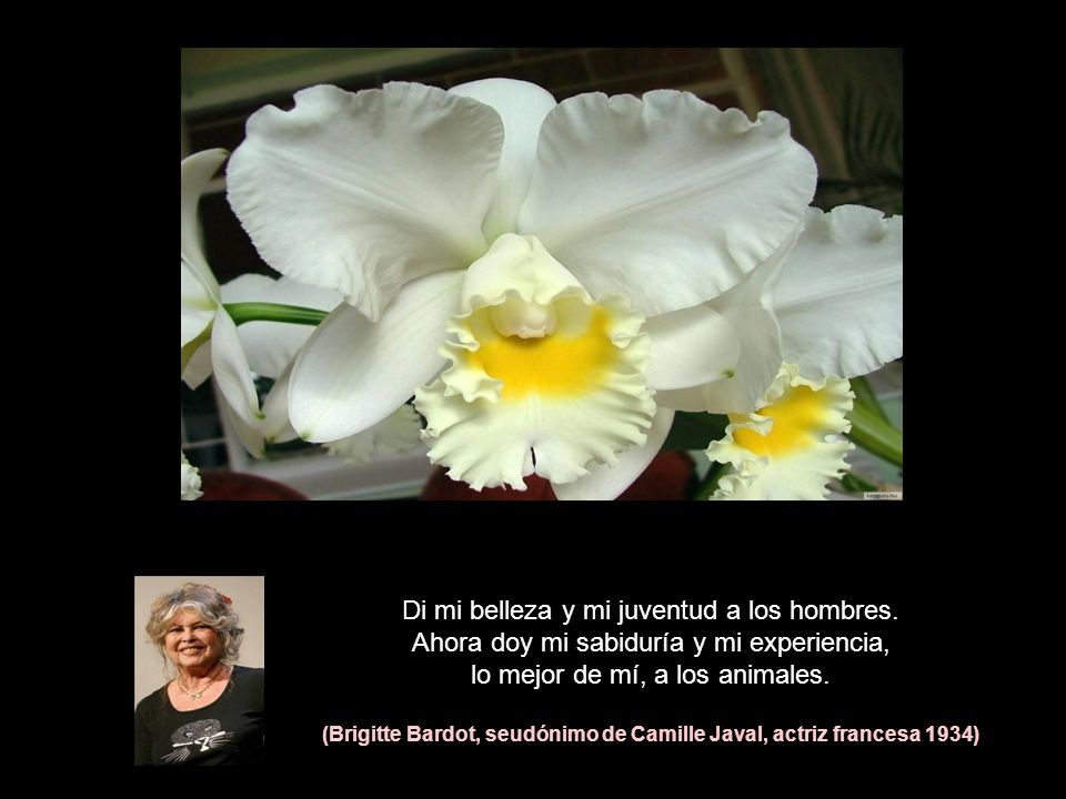 (Brigitte Bardot, seudónimo de Camille Javal, actriz francesa 1934)