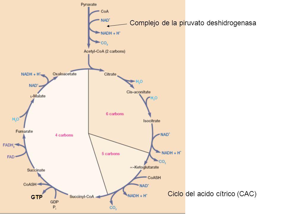 Complejo de la piruvato deshidrogenasa