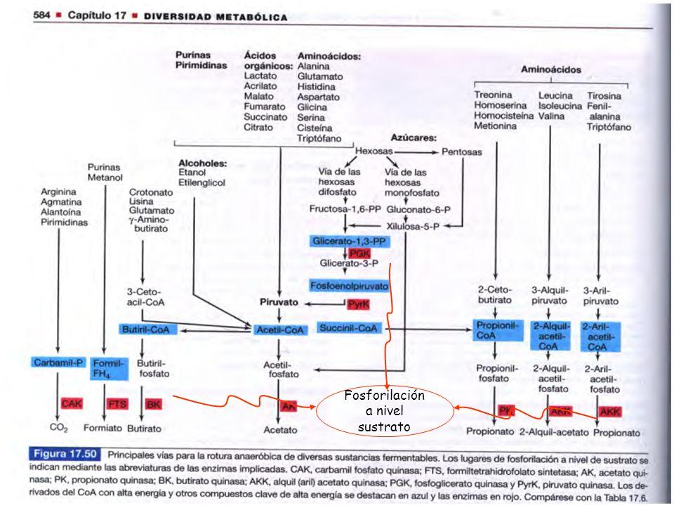Fosforilación a nivel sustrato