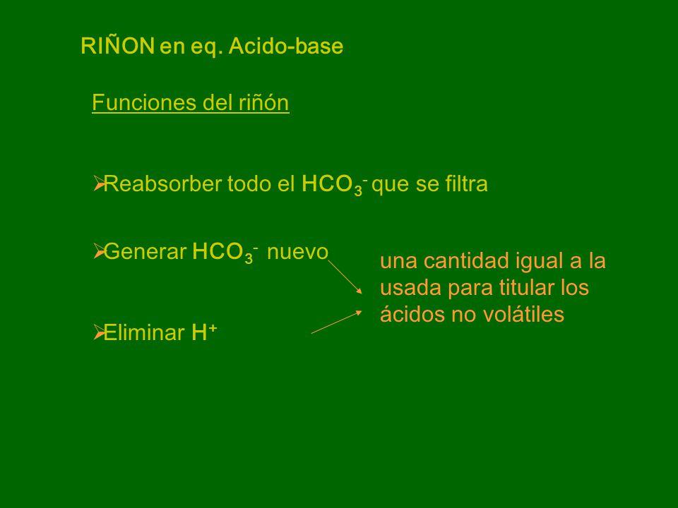 RIÑON en eq. Acido-base Funciones del riñón. Reabsorber todo el HCO3- que se filtra. Generar HCO3- nuevo.
