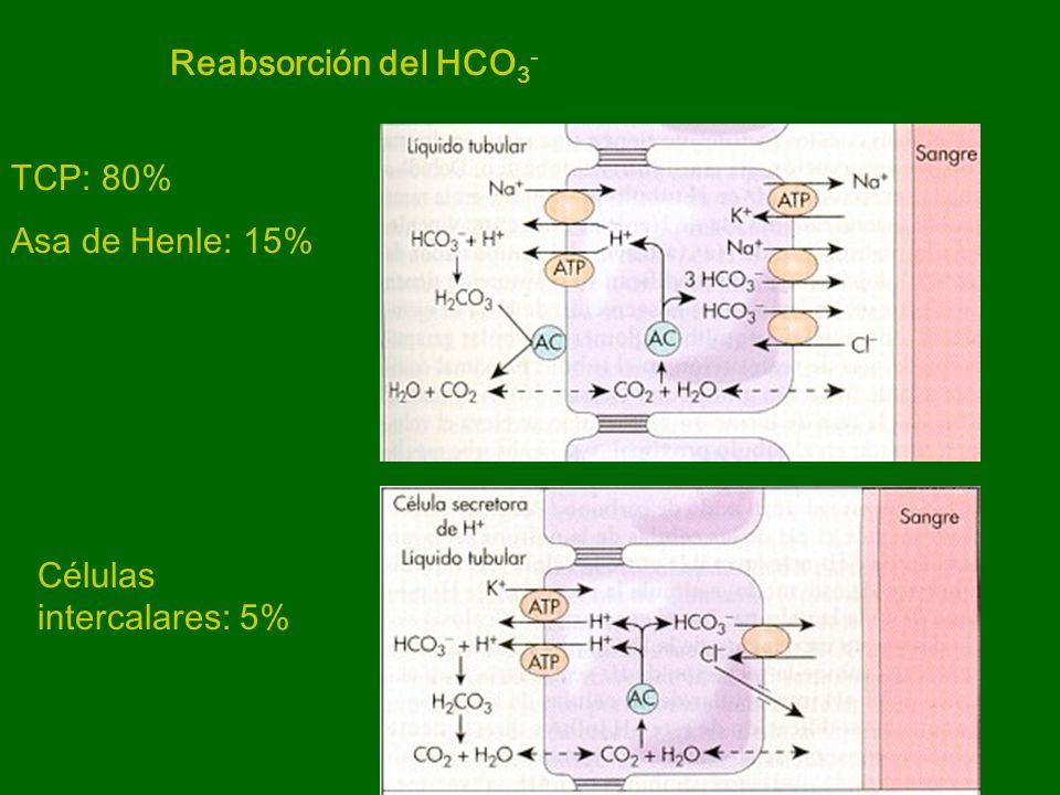Reabsorción del HCO3- TCP: 80% Asa de Henle: 15% Células intercalares: 5%