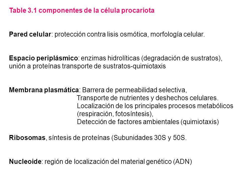 Table 3.1 componentes de la célula procariota