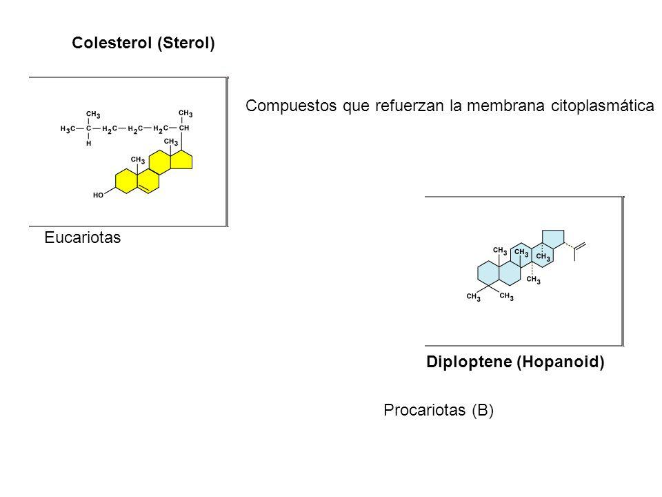 Colesterol (Sterol) Compuestos que refuerzan la membrana citoplasmática. Eucariotas. Diploptene (Hopanoid)