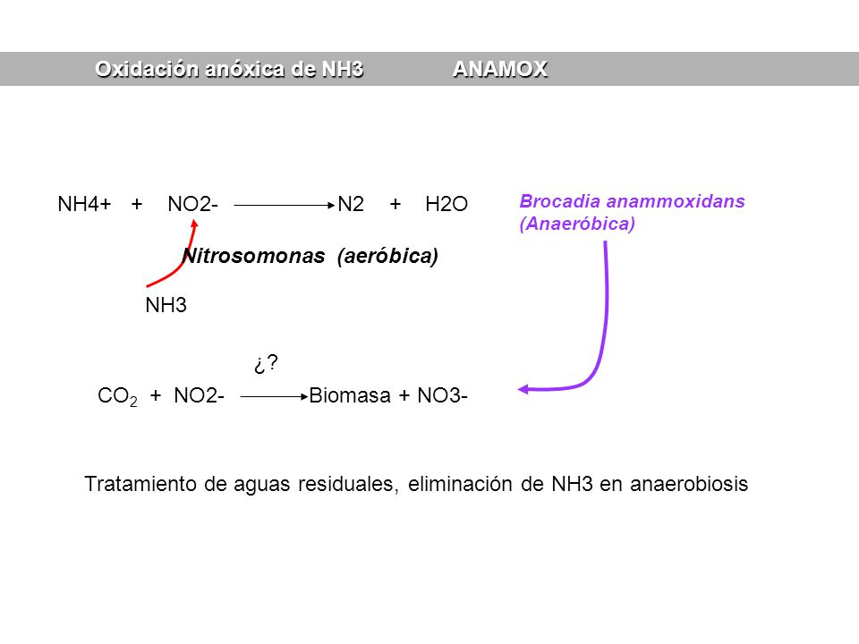 Oxidación anóxica de NH3 ANAMOX