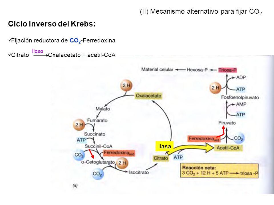 Ciclo Inverso del Krebs: