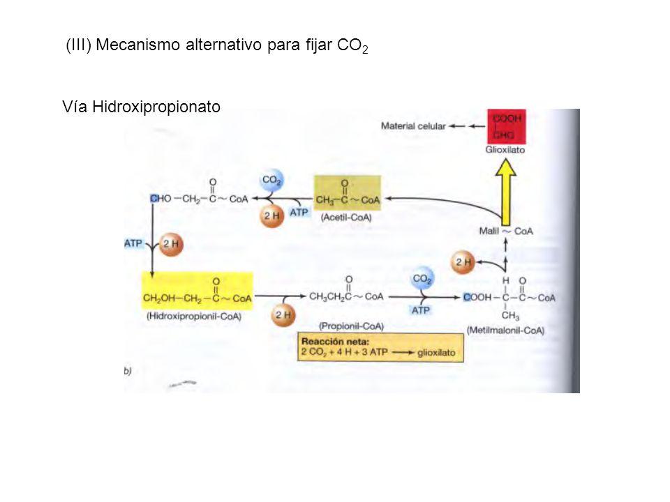 (III) Mecanismo alternativo para fijar CO2
