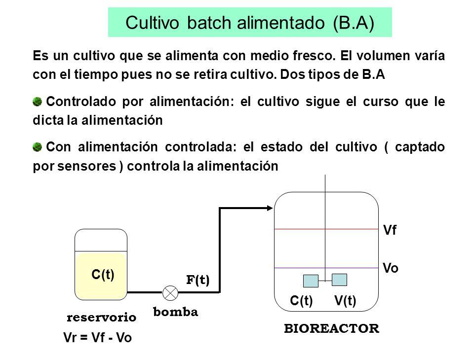 Cultivo batch alimentado (B.A)