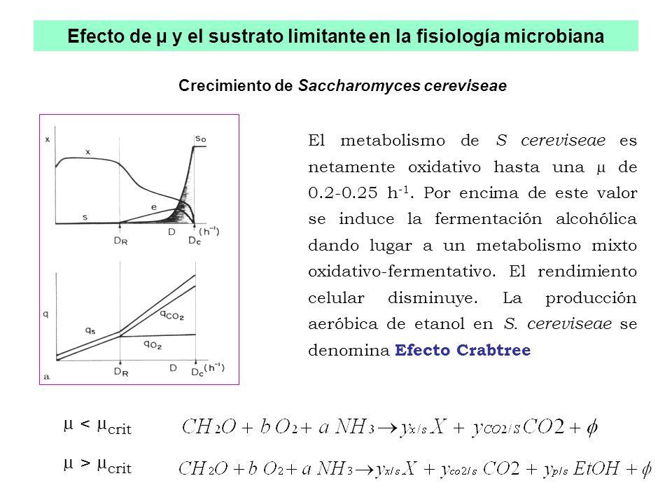 Efecto de µ y el sustrato limitante en la fisiología microbiana
