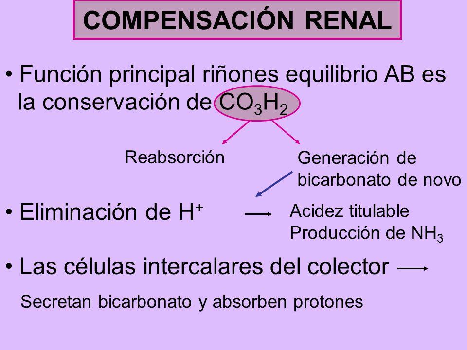 COMPENSACIÓN RENAL Función principal riñones equilibrio AB es