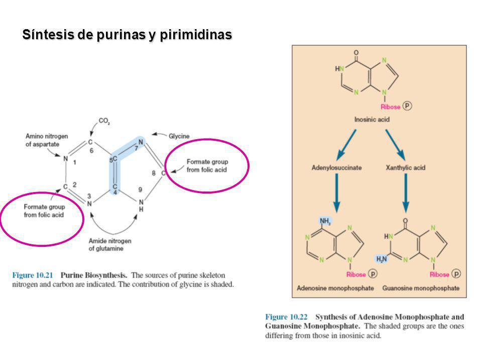 Síntesis de purinas y pirimidinas