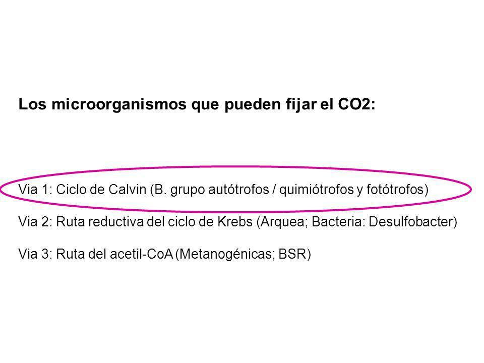 Los microorganismos que pueden fijar el CO2: