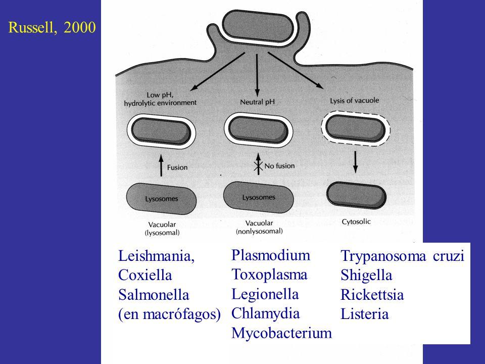 Russell, 2000 Leishmania, Coxiella. Salmonella. (en macrófagos) Plasmodium. Toxoplasma. Legionella.