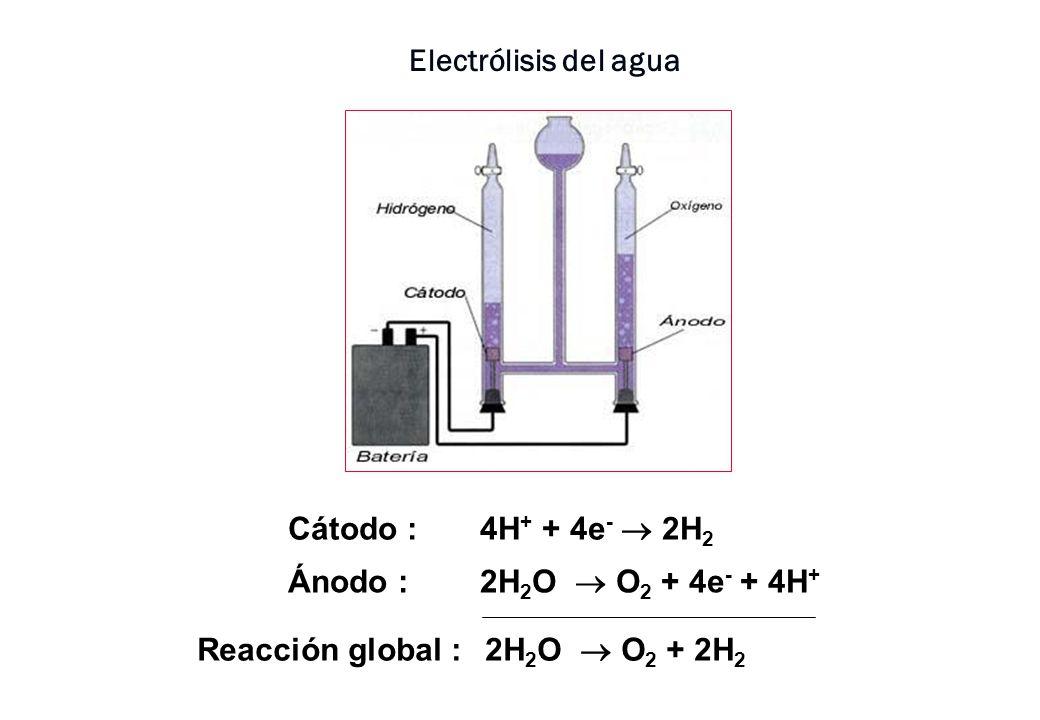 Electrólisis del agua Cátodo : 4H+ + 4e-  2H2.