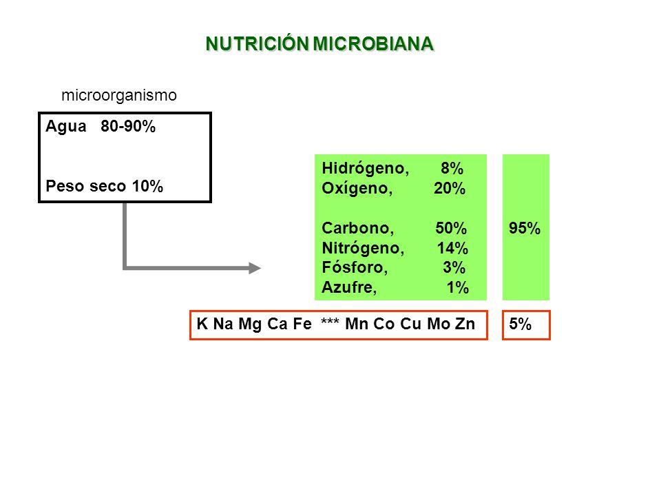 NUTRICIÓN MICROBIANA microorganismo Agua 80-90% Peso seco 10%