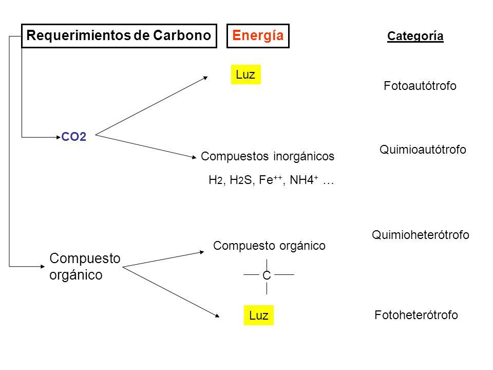 Requerimientos de Carbono Energía