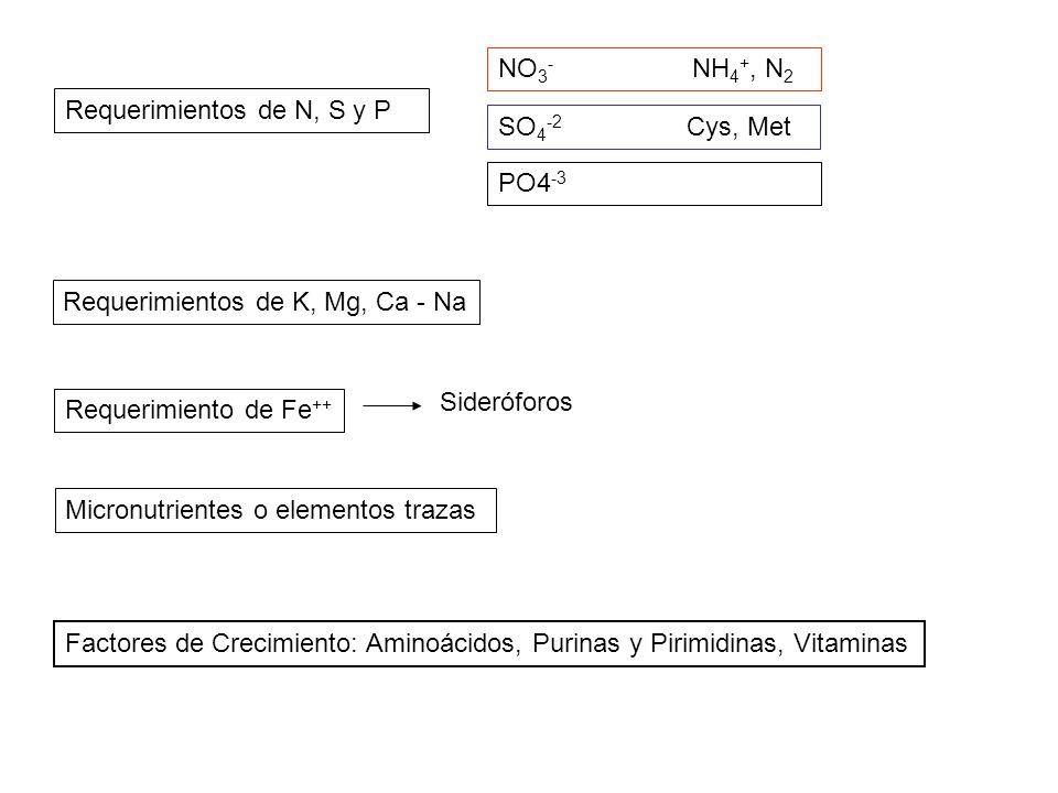 NO3- NH4+, N2 SO4-2 Cys, Met. PO4-3. Requerimientos de N, S y P.