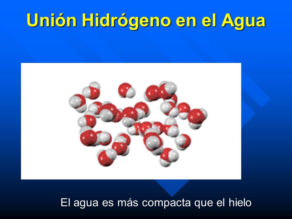 Unión Hidrógeno en el Agua