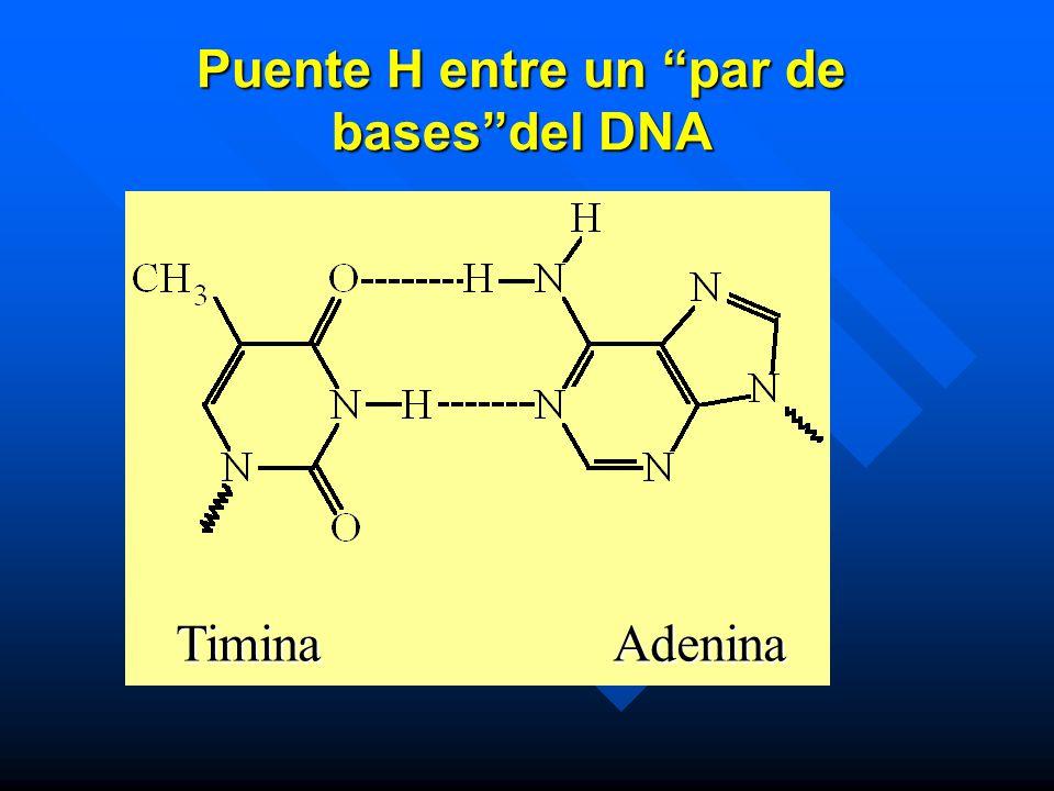 Puente H entre un par de bases del DNA