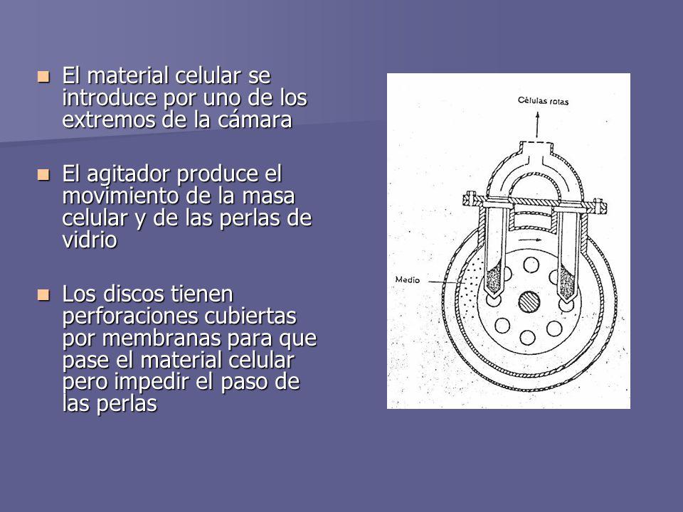 El material celular se introduce por uno de los extremos de la cámara