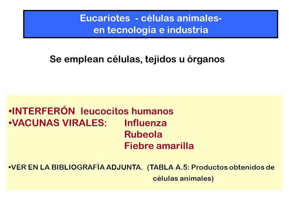 Eucariotes - células animales- en tecnología e industria