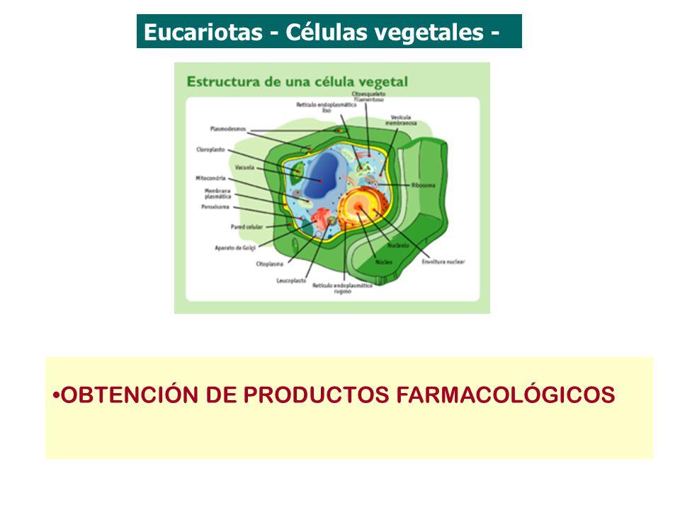 Eucariotas - Células vegetales -