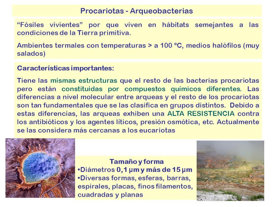 Procariotas - Arqueobacterias