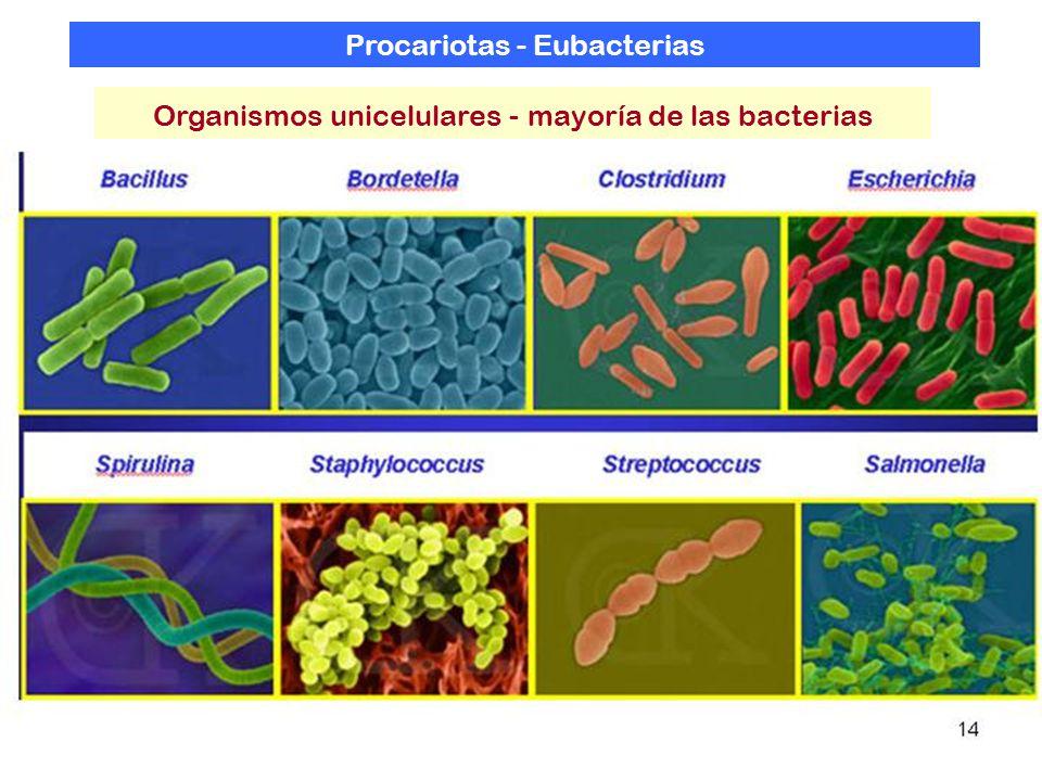 Procariotas - Eubacterias