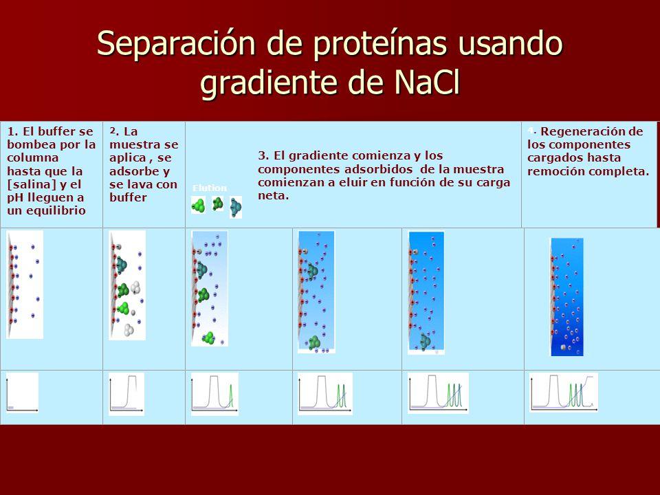 Separación de proteínas usando gradiente de NaCl