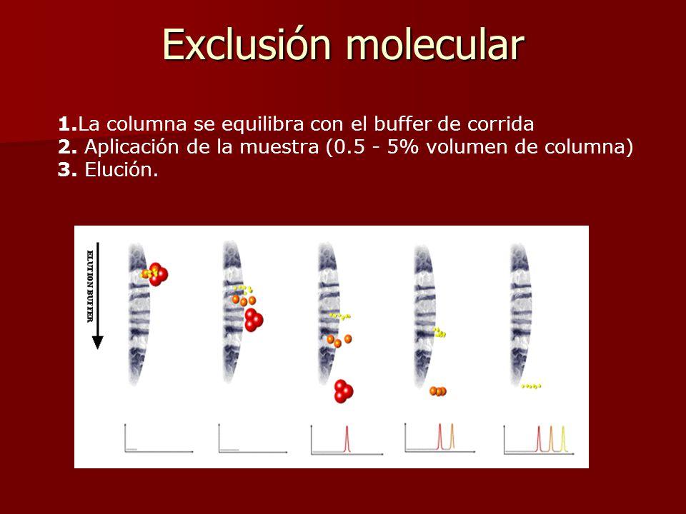 Exclusión molecular 1.La columna se equilibra con el buffer de corrida