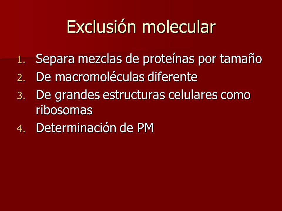 Exclusión molecular Separa mezclas de proteínas por tamaño