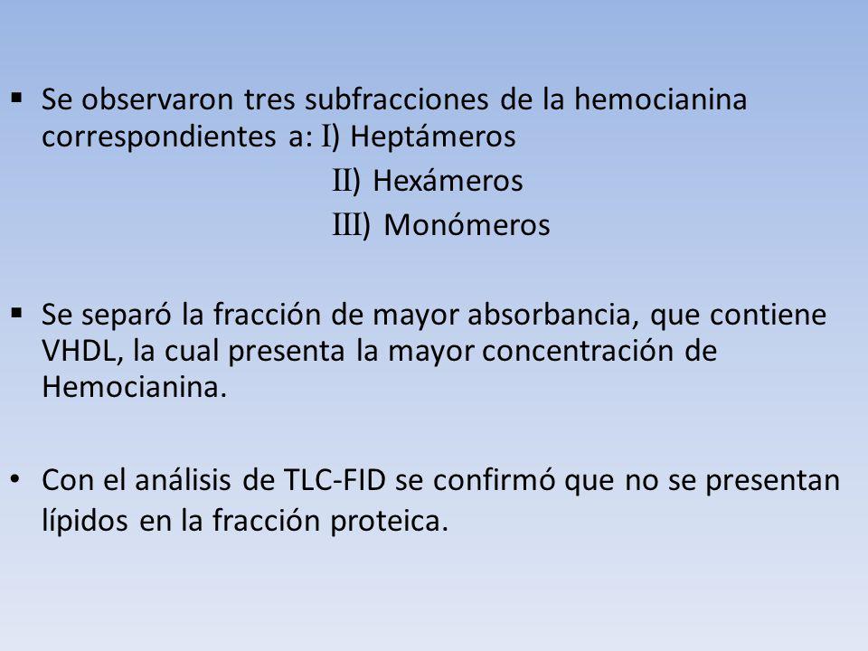 Se observaron tres subfracciones de la hemocianina correspondientes a: I) Heptámeros