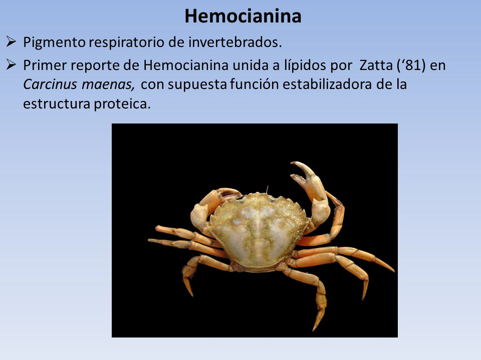 Hemocianina Pigmento respiratorio de invertebrados.