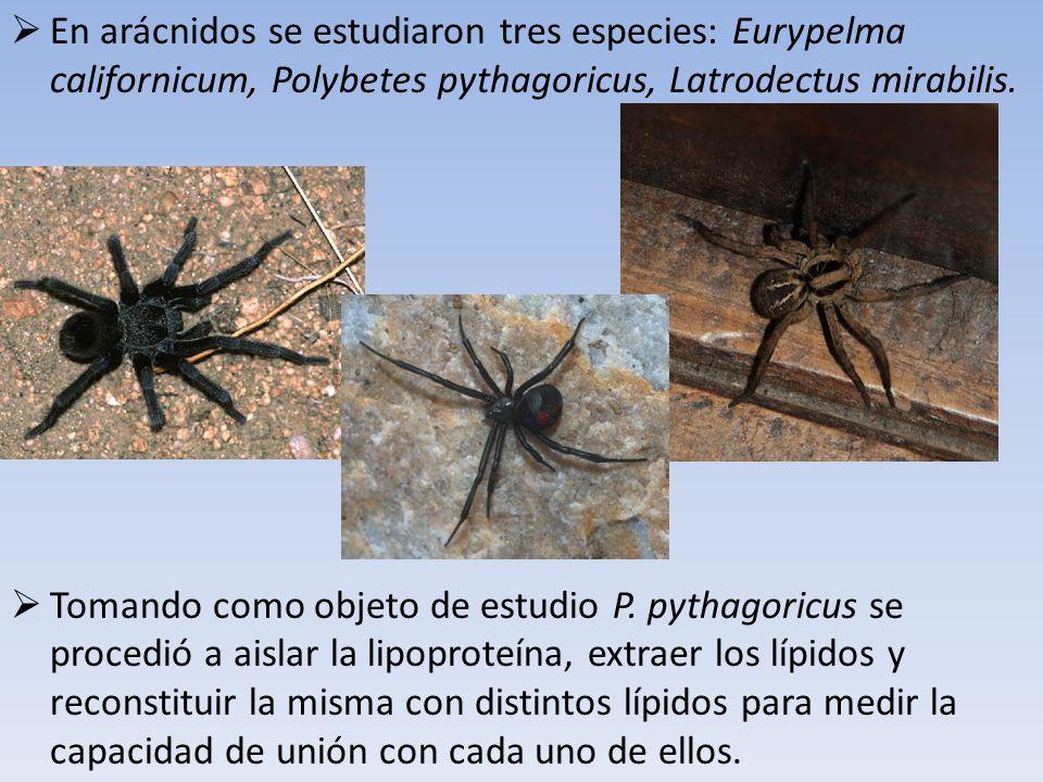 En arácnidos se estudiaron tres especies: Eurypelma californicum, Polybetes pythagoricus, Latrodectus mirabilis.