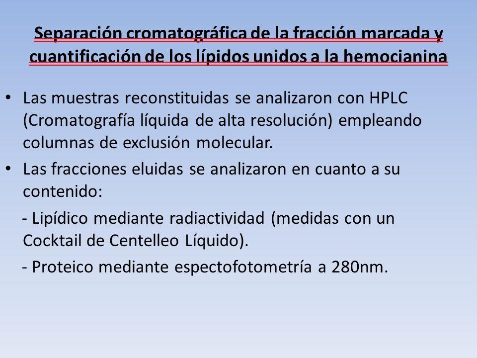 Separación cromatográfica de la fracción marcada y cuantificación de los lípidos unidos a la hemocianina