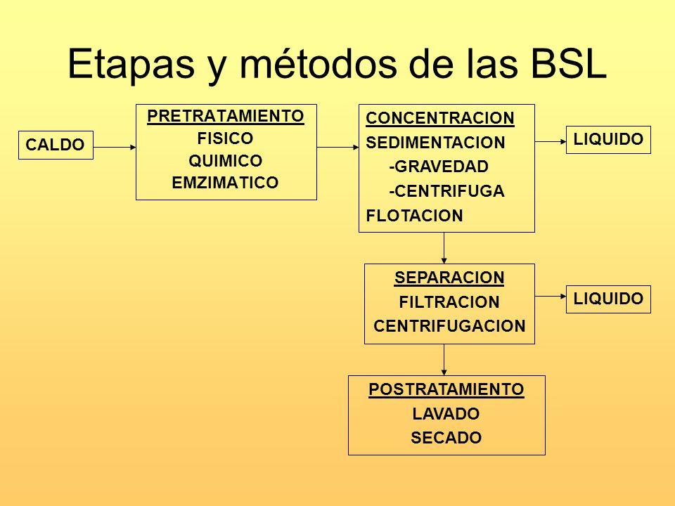 Etapas y métodos de las BSL