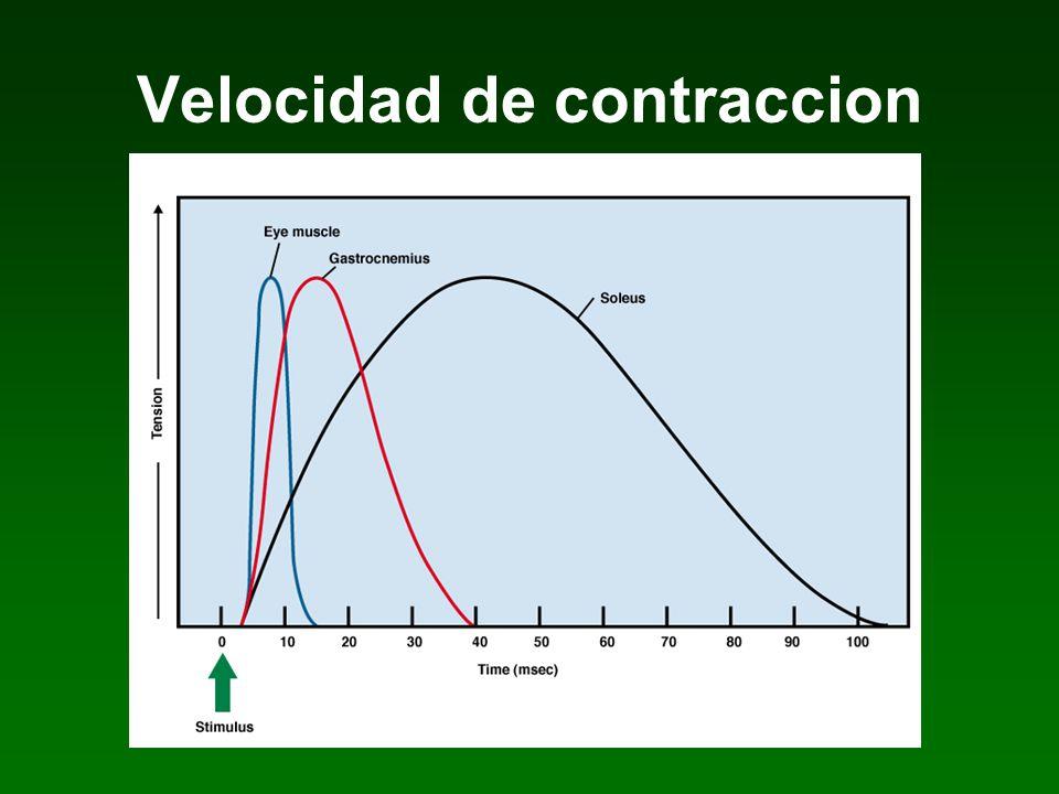 Velocidad de contraccion
